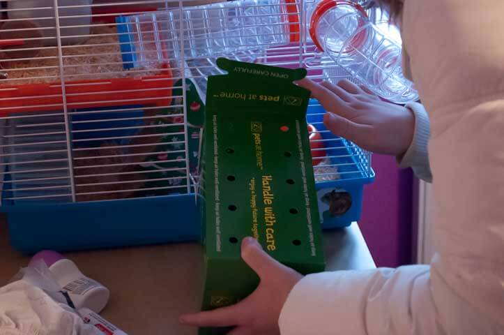 Jack the Hamster arrives at his new home