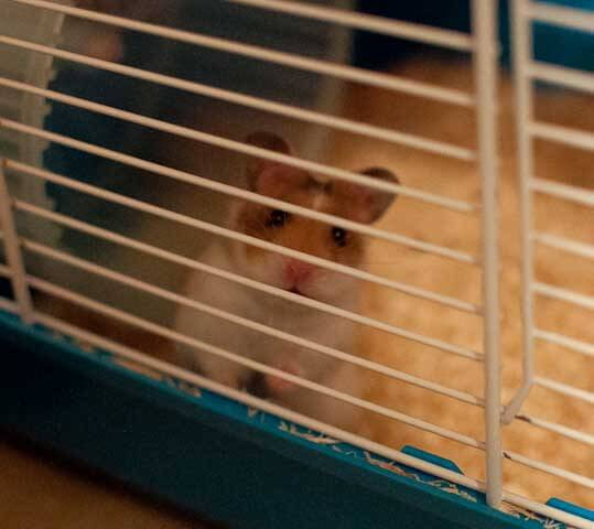 Jack the new hamster saying hello for the first time