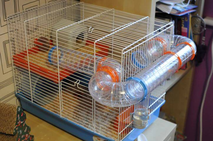 Jack the Hamster's new cage