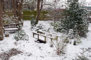 Our garden looking very picturesque in the snow.