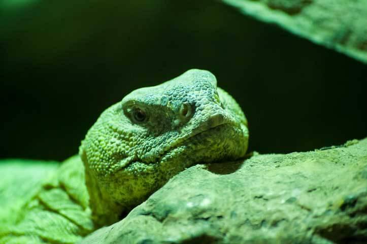 A green lizard up close