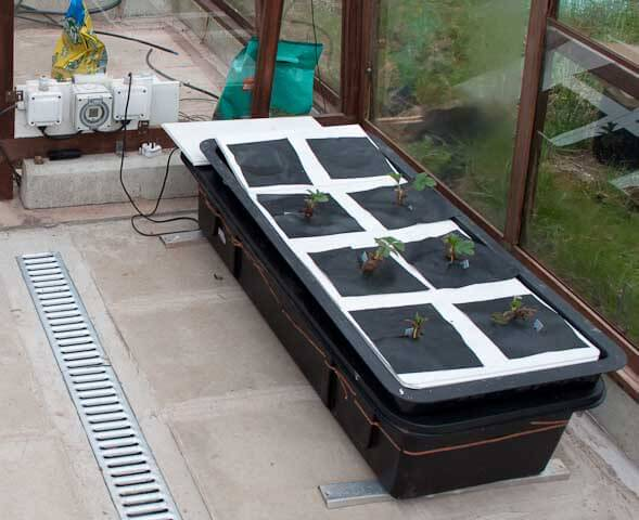 The flood and drain hydroponic strawberry tank showing the timer connected to it
