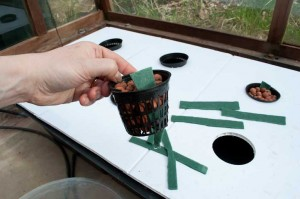 The NFT Strawberry pots with clay pebbles and wicking material