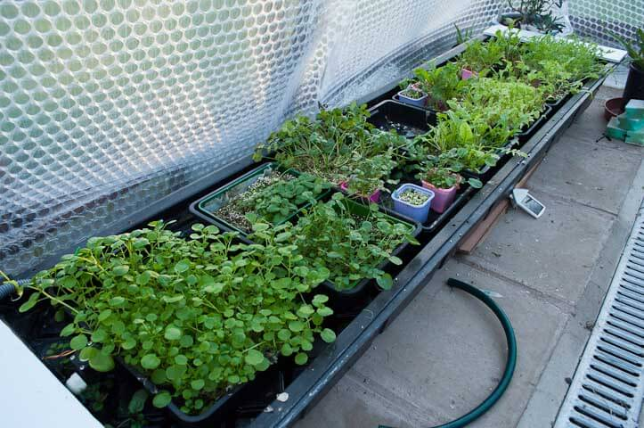 My winter watercress/herbs and leafy lettuce ebb and flood setup
